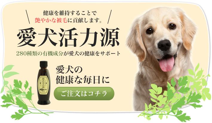 愛犬活力源