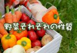 野菜それぞれの性質