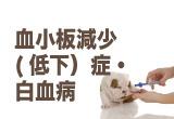 血小板減少(低下)・白血病